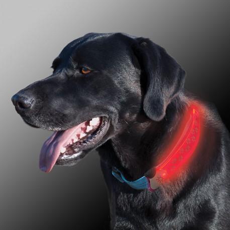 Маркер на ошейник NITE DAWG - LED DOG COLLAR