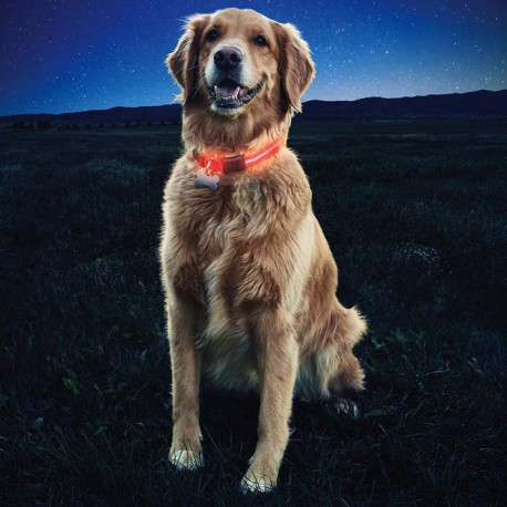 Светящийся светодиодный ошейник Nite Dawg - LED Dog Collar